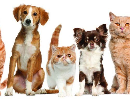 До Всесвітнього дня домашніх тварин